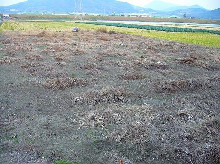 オノ地の草抜き1