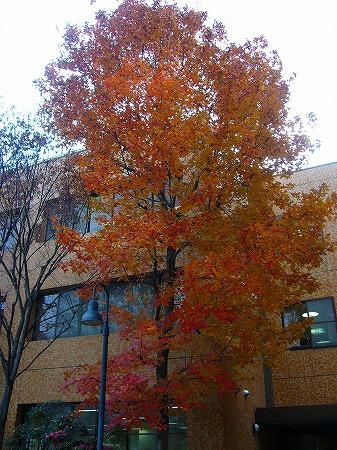 病院の木1