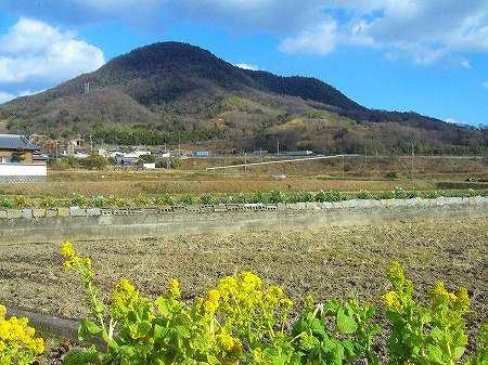 菜の花と山