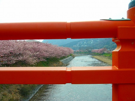 河津桜と欄干