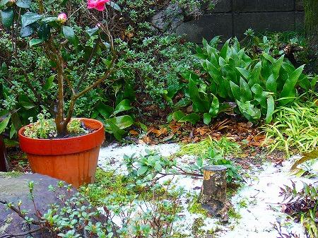 庭に雪3月
