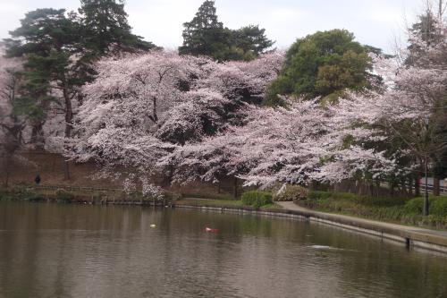 100403-202桜2(縮小)