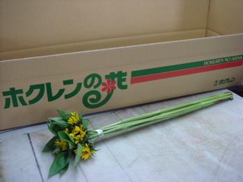 0508himawari-syukka.jpg
