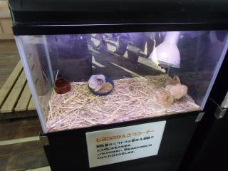 フェニックス自然動物園