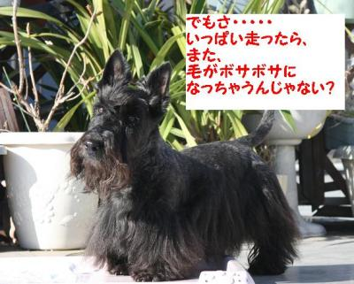 a_20091220180508.jpg