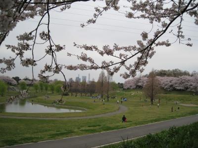 2010桜①