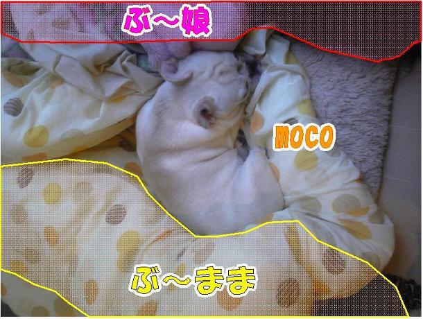 moco5.jpg