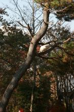 木登り猫3