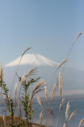 ススキと富士山2