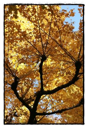秋まっさかり