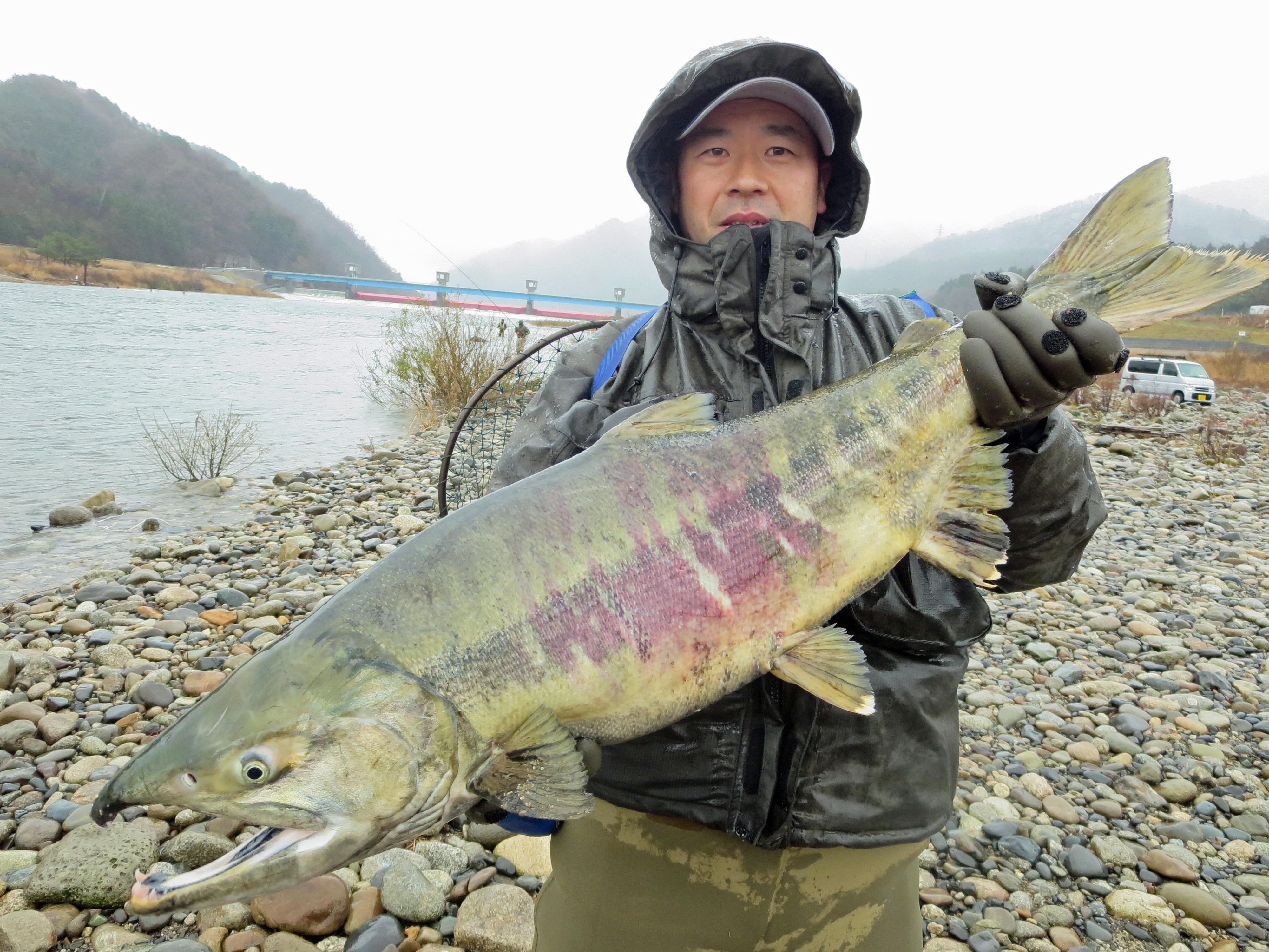2013荒川鮭釣り 12月20日 最終日 村上市観光