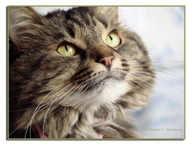 猫 顔 表情 上を向く動物