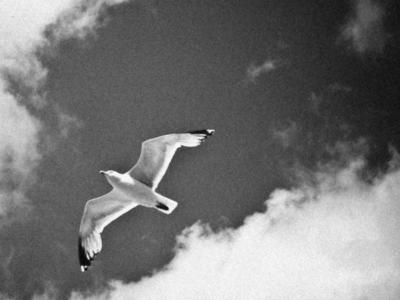 カモメ 鳥 飛行 空 雲 モノクロ ノスタルジック