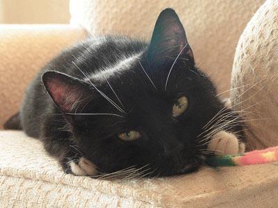 黒猫 寝る 目線 ふて寝