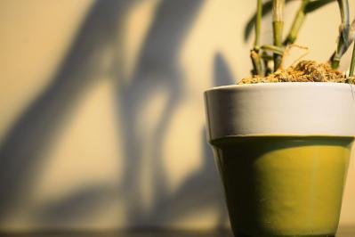 プラント ポット 鉢 植物