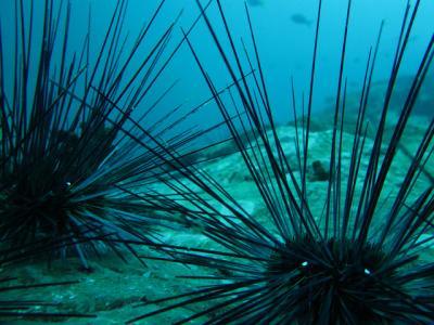 ウニ 生物 海 とげ
