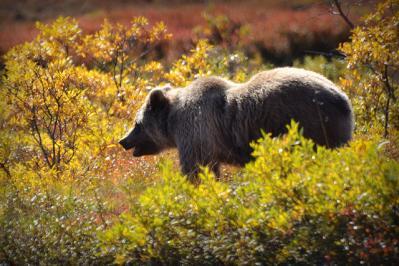熊 自然 風景 動物