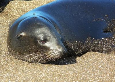 アシカ 海 動物 海洋動物