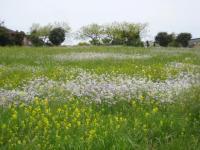 お花畑は遠くで見るのが一番