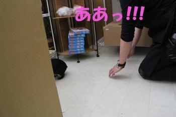 aaa_20110602183350.jpg