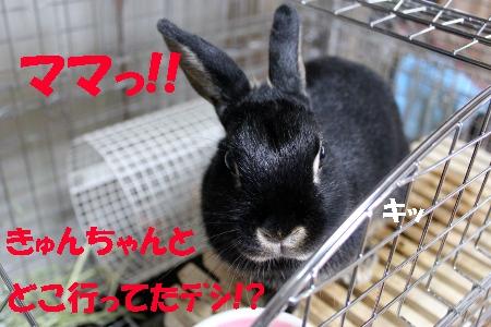 ki_20110531210803.jpg
