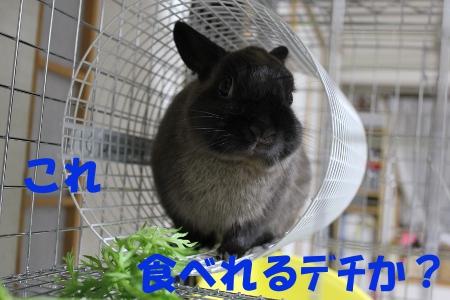 kore_20110519231006.jpg