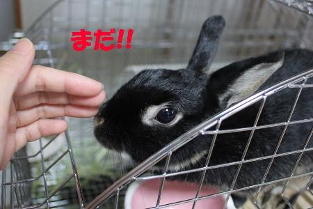 mada_20110531211703.jpg