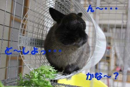 nnn_20110519231215.jpg