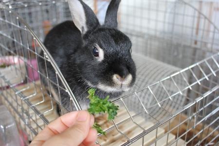 parsley_20110522223550.jpg