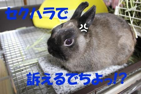 sekuhara.jpg