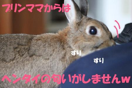 surisuri_20110429181918.jpg