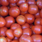 tomatoィ_convert_20100910220515
