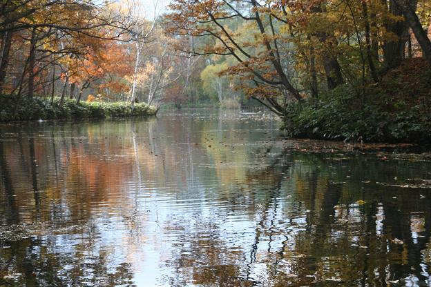 鳥沼公園の沼