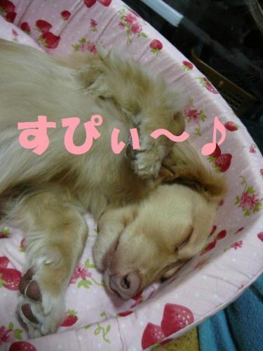 眠いの~~ZZzz・・・