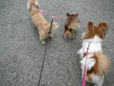 2頭匹リードでお散歩♪