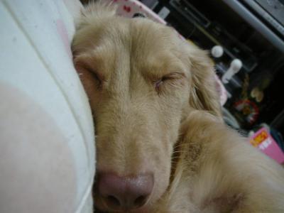寝たフリ・・・・