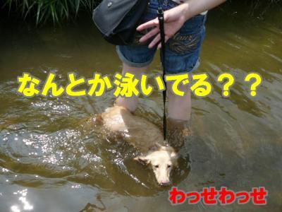 時々溺れそうに・・・・