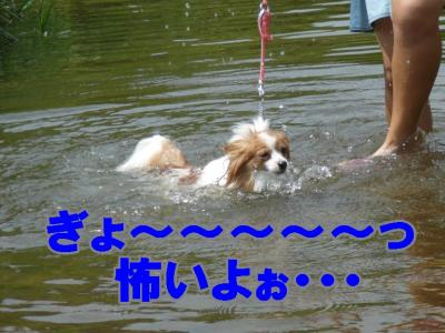 必死に泳ぐモカ