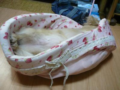 ベッドが・・・・(´;ω;`)ウゥゥ