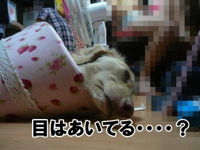 目あけて寝てるんか??