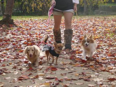 落ち葉の上のお散歩