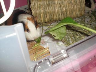 小松菜とトッポ