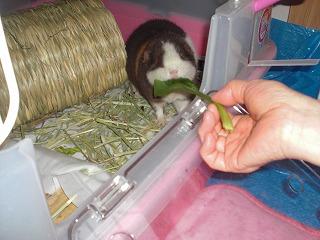 小松菜とミル