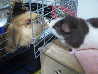 ミル&ココ1