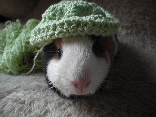 帽子トッポ