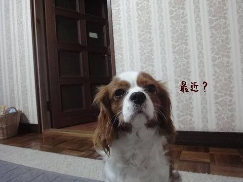 001_20100305224441.jpg