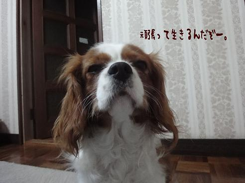 002_20100305224441.jpg