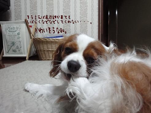 003_20100706222523.jpg