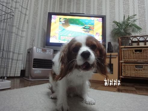 004_20100408231017.jpg