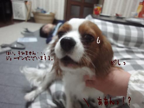 004_20100415224906.jpg